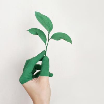 Green economy: ecco la lista delle professioni sostenibili, immagine in evidenza